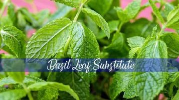 basil leaf substitute