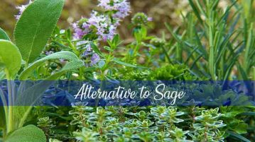 alternative to sage